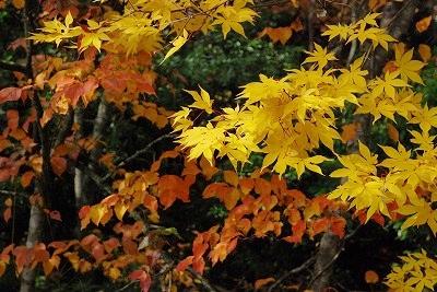 聖湖の秋 8