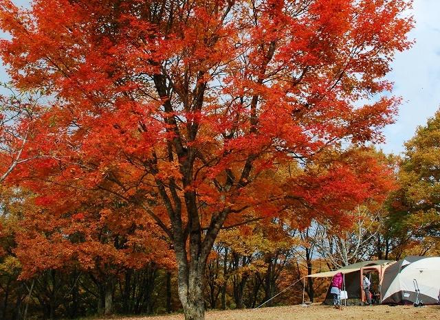 聖湖の秋5