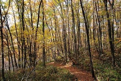 聖湖の秋 3
