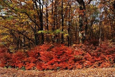 聖湖の秋 4