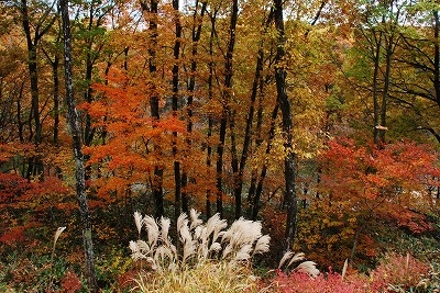 聖湖の秋 10