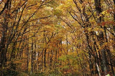 聖湖の秋17