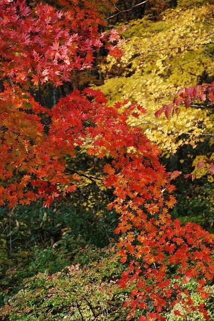 聖湖の秋 12