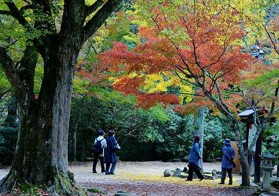 宮島歩き 8