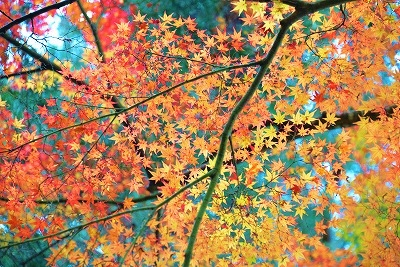 安芸高田の秋 4