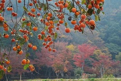安芸高田の秋7