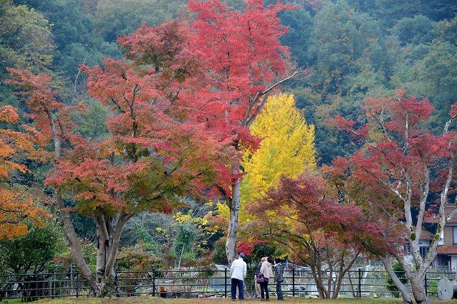 安芸高田の秋 8