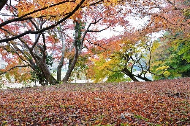 安芸高田の秋 10