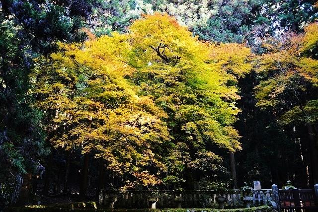 安芸高田の秋6