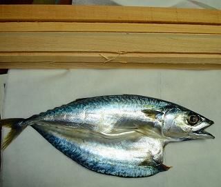 長崎産鯖の一夜干しを檜材で燻製に