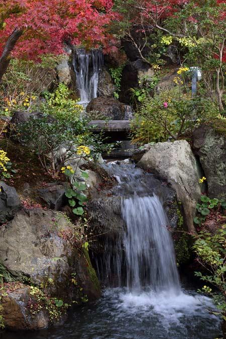 水景園 紅葉1