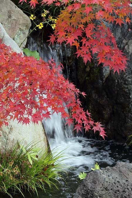 水景園 紅葉2