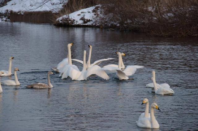 swan1401L_eip.jpg