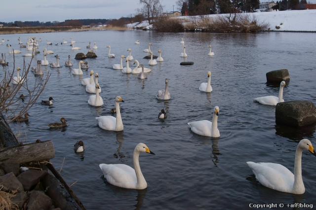 swan1401b_eip.jpg