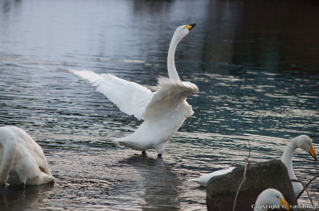 swan1401f_eip.jpg