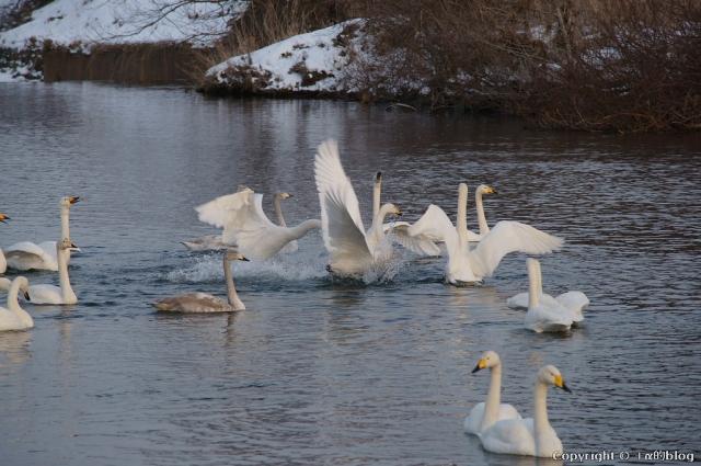 swan1401m_eip.jpg