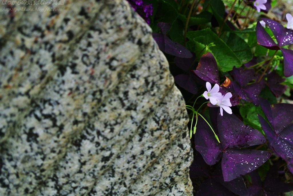 石臼とオキザリス