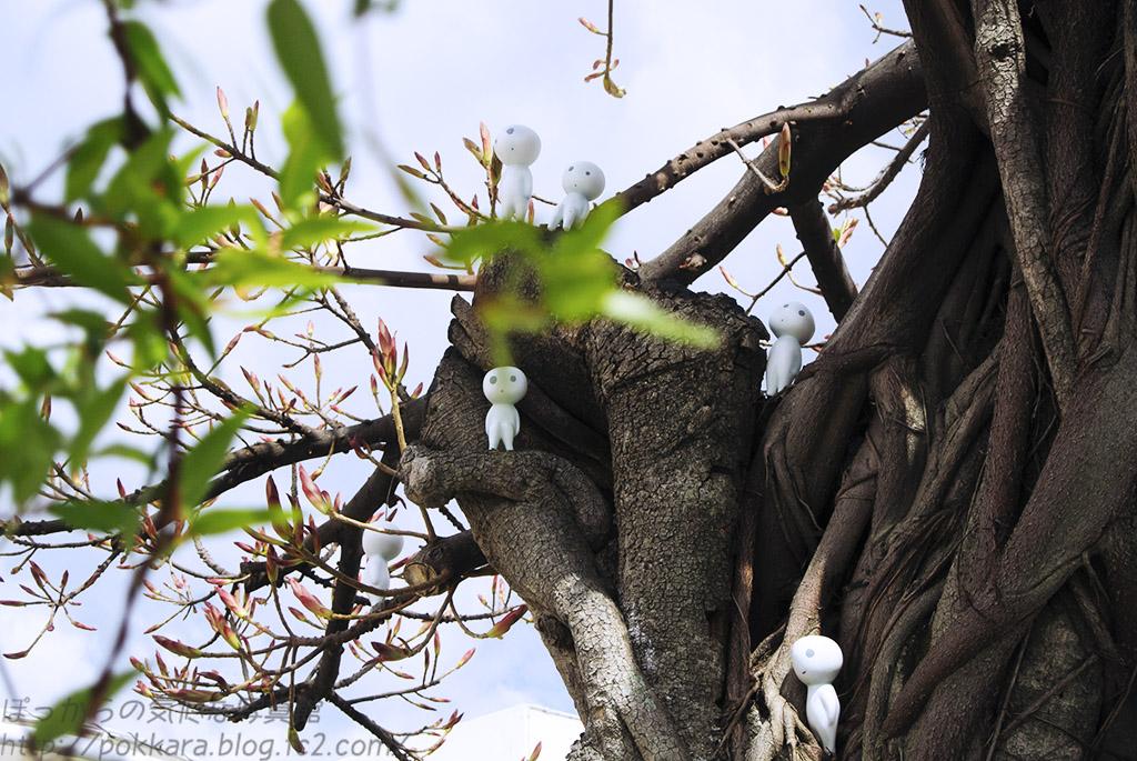 アコウの木in精霊