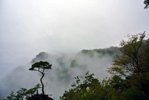 雨中の鳳来寺②