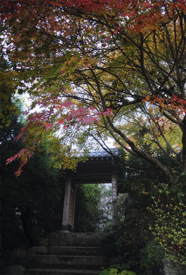 早朝の桂徳院:門