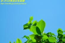 $ぽっからの気侭な写真館-青空と新緑