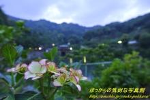 $ぽっからの気侭な写真館-紫陽花(紅系①