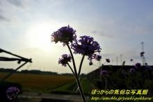 $ぽっからの気侭な写真館-何の花?