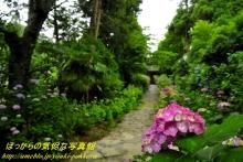 $ぽっからの気侭な写真館-本光寺参道と紫陽花