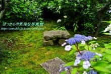 $ぽっからの気侭な写真館-本光寺・庭と紫陽花