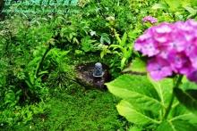 $ぽっからの気侭な写真館-本光寺・小石像と紫陽花