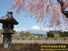 $ぽっからの気侭な写真館-遠照寺の桜と富士