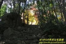 $ぽっからの気侭な写真館-石段の上の黄金色に輝く紅葉