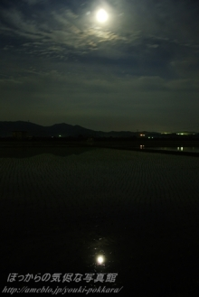 $ぽっからの気侭な写真館-月光に照らされる水田