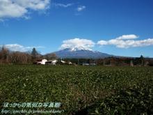 $ぽっからの気侭な写真館-茶畑と富士