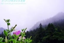 $ぽっからの気侭な写真館-霧の山