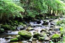 $ぽっからの気侭な写真館-鳴沢の渓流