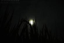 $ぽっからの気侭な写真館-稲穂と満月