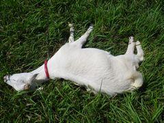 [写真]アランが草を食べようと首を伸ばしているところ