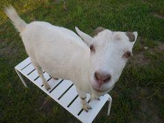 [写真]大好きなベンチの上に乗って、こちらを見上げるアラン