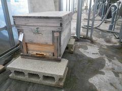 [写真]本圃ハウスに設置されたミツバチの巣箱