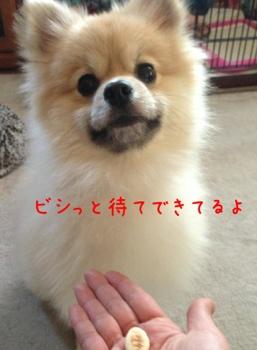 fc2blog_20130328185836ff6.jpg