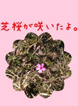 fc2blog_20130330180843a5d.jpg