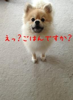 fc2blog_20130410172612229.jpg