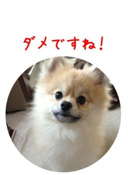 fc2blog_20130412155050f9b.jpg