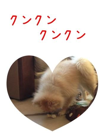 fc2blog_201304141642481e3.jpg
