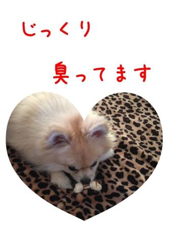 fc2blog_201304141645502b3.jpg