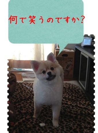 fc2blog_20130416074555e6b.jpg