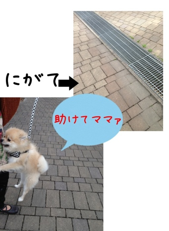 fc2blog_201304191527041ad.jpg
