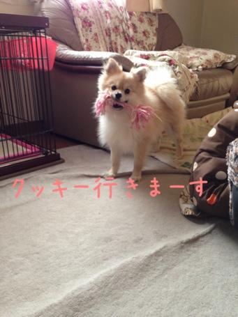 fc2blog_20130428165621dad.jpg