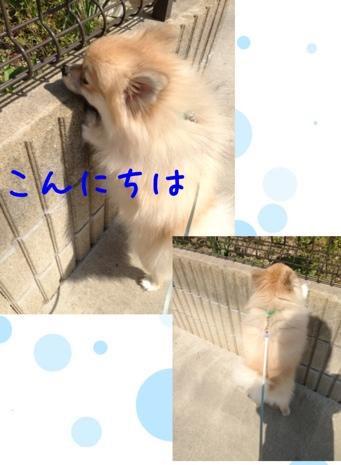 fc2blog_20130513150239af6.jpg